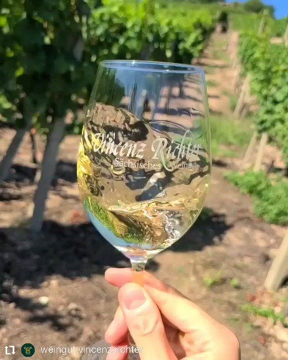 #Repost Video @weingut.vincenz.richter